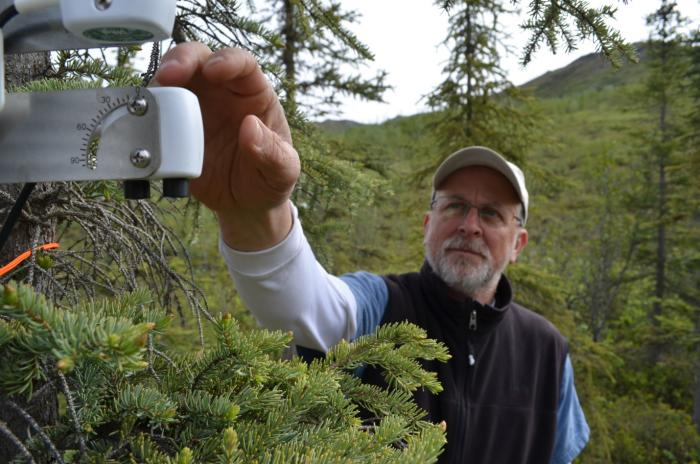Lamont-Doherty plant physiologist Kevin Griffin checks an instrument designed to monitor a spruce tree's photosynthetic activity. Photo: Kevin Krajick