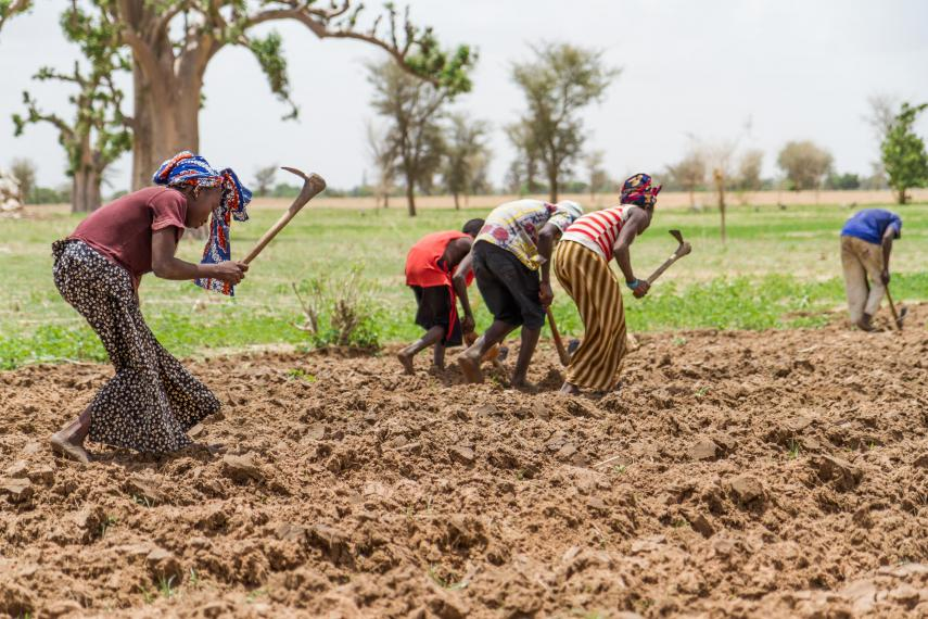 Land at the northern edge of Africa's Sahel could become suitable for farming if sulfur emissions in the United States continue to rapidly decline, says a new study. Here, farmers near Segou, Mali, plant maize at the start of the rainy season. (Francesco Fiondella/International Research Institute for Climate and Society, Columbia)
