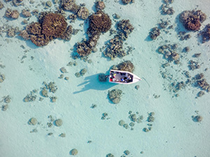 A drone's-eye view of corals in Moorea, French Polynesia, where Alessio Rovere and colleagues are monitoring the health of a reef that underwent dramatic bleaching in 2015. (Alessio Rovere and Elisa Casella/ MARUM,Uni Bremen & Leibniz ZMT / Lamont-Doherty Earth Observatory)