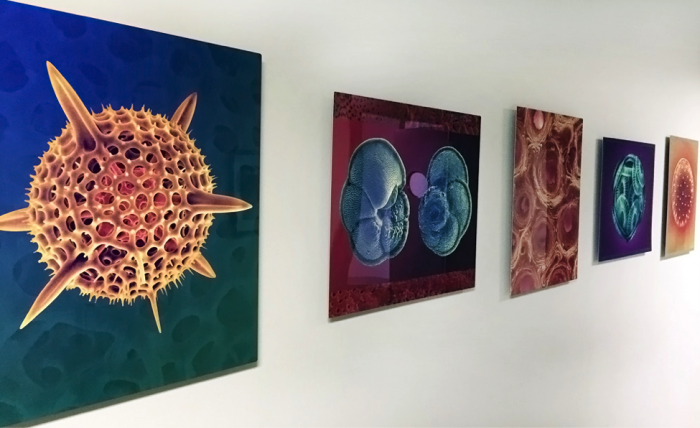 Dee Breger's images line the entrance to the Lamont Core Repository. The first image on the left is a radiolarian skeleton. The second from the right shows the calcite plating of a coccolithophore. See more of her work at MicrographicArts.com. Photo: Lamont-Doherty Earth Observatory