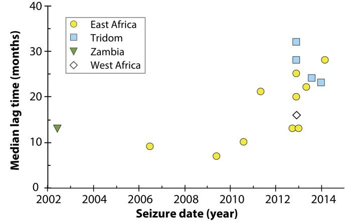 A chart from the study shows the lag time between killing of an elephant and the seizure of its tusk (vertical axis), and how that has changed over time (horizontal axis). From 2002 through 2010, it was a year or less. Since then, the lag time has ascended to two or three years. The authors think this suggests poachers are exhausting the resource, and need more time to build up a stockpile before making a shipment. The symbols stand for different regions; Tridom indicates elephants from Cameroon, Gabon or Congo. (Cerling et al., PNAS)