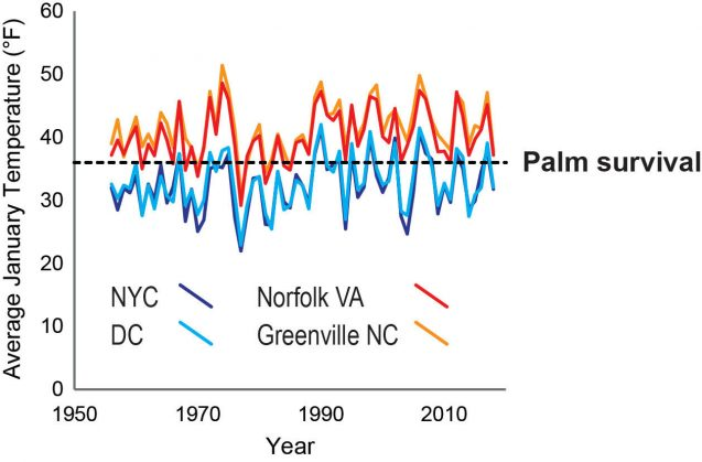 Rising average temperatures are making it easier for palm trees to survive in areas that are not typically considered tropical. Graphic: Tammo Reichgelt