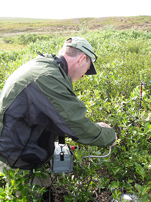 Study coauthor Matthew Turnbull measures chlorophyll fluorescence of an arctic willow near the Toolik Lake research station in northern Alaska  (Kevin Griffin/Lamont-Doherty Earth Observatory)