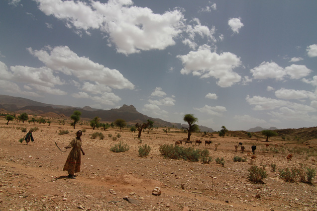 A new study projects that much of Ethiopia, Somalia and Djibouti in the Horn of Africa will grow drier as global warming progresses. In northern Ethiopia, herders often already struggle to make a living. (Brian Kahn/IRI)