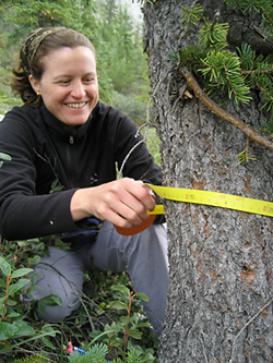 Trees in Alaskas far north are growing faster than they were a hundred years ago says a study led by Lamont-Doherty scientist Laia Andreu-Hayles.