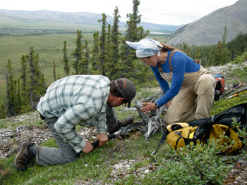 Researchers have traveled to the Alaskan treeline repeatedly. Lamont tree-ring scientist Kevin Anchukaitis (left) and Fairbanks arctic ecologist Angela Allen sample a dead spruce.