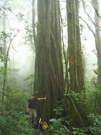 Researcher Kevin Anchukaitis sampled nearly 30 old trees in the Monteverde cloud forest before finding two whose climate data could be extracted