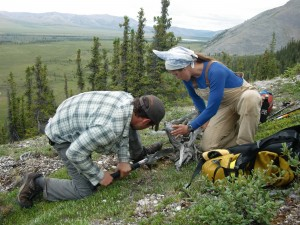 Tree rings contain exquisitely detailed records about past climates. Members of the Tree Ring Lab travel to many remote places to collect and study samples. Here, researchers work at the edge of the northern Alaska tundra.