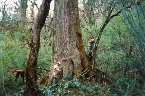 Tree ring scientists Ed Cook (left) and Paul Krusic trekked for<br />