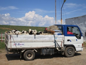 Pastoral traditions remain strong, but Mongolians are now rapidly gaining access to roads, vehicles, cell phones and other modern trappings. This shift could exert increasing pressure on a land where grass and animals have up to now been the main source of wealth.