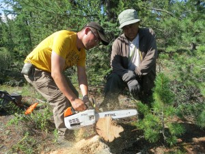 Rings of ancient trees provide key insights into past climate. In Mongolia's rocky Khangai Mountains, ecologist Byambasuren Oyunsanaa and biophysicist Damdin Suren Sodov cross-section a dead trunk that easily could have grown 1,000 years ago.